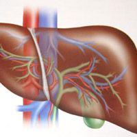 Что такое гепатит у взрослых